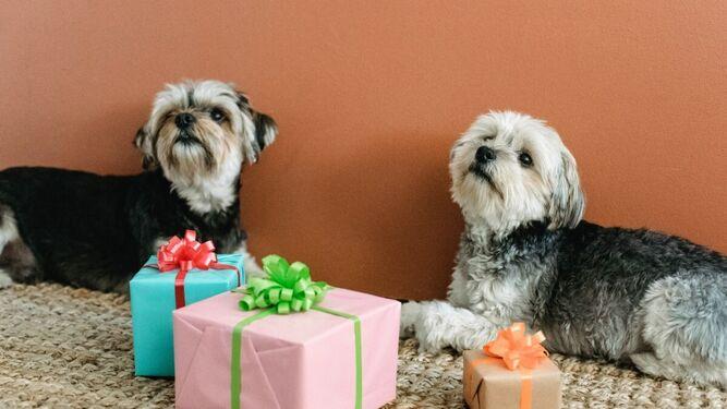 Día Mundial del Perro 2021: ¿Por qué se celebra el 21 de julio y cómo celebrarlo?