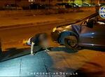 Flexiones para bajar la borrachera: un conductor novel cuadruplica la tasa de alcohol y hace ejercicio ante la Policía